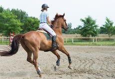 Sports équestres, cheval sautant, sauter d'exposition photos libres de droits