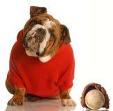 sports de chien photo stock