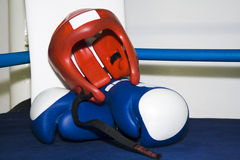 Sports equipment for boxing Stock Image