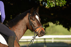 Sports horse Stock Images