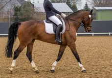 Sports horse. In the tournament stock images
