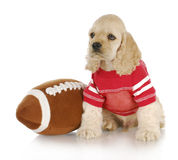 Sports hound Stock Photography