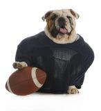 Sports hound Royalty Free Stock Photos