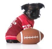 Sports hound Royalty Free Stock Photo