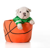 Sports hound Royalty Free Stock Photography