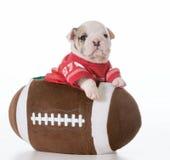 Sports hound Royalty Free Stock Image