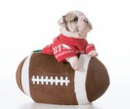 Sports hound. Bulldog puppy inside a football Stock Image