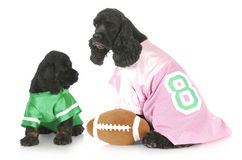Sports hounds Stock Photo