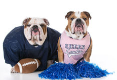 Sports hounds Royalty Free Stock Photography