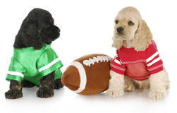 Sports puppies Royalty Free Stock Photos