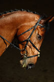Sports saddle horse with bridle Royalty Free Stock Images