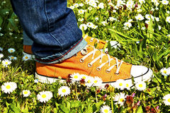 Sports Shoe and grass Royalty Free Stock Photography