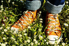 Sports Shoe and grass Stock Images