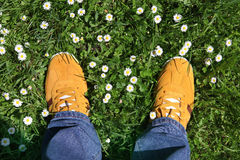 Sports shoes on green grass. Part of legs in sports shoes on green grass around camomiles Stock Photos