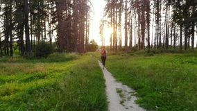 Sports woman running in woods along trail. Woman runner runs along forest trail at sunset stock footage