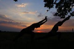 Sportslig flicka som två poserar och blis in i ställingar av yoga eller pil Fotografering för Bildbyråer
