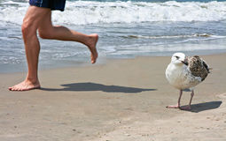 Sportsman And Gull Stock Photography
