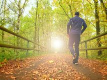 Sportsman in  black sortswear run on road covered by autumn leaves. Royalty Free Stock Photos
