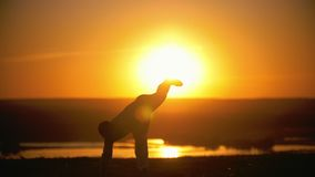Sportsman is engaged in capoeira in the background of an orange sunset, slow-motion stock video footage