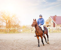 Sportsman riding horse on equestrian competition. Royalty Free Stock Photo