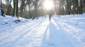 Sportsman running through winter forest. stock video