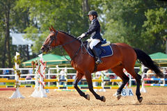 The sportswoman on a horse. stock photography