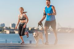 Sportswoman and sportsman jogging with dog. Athletic sportswoman and sportsman jogging with golden retriever dog in city at daytime royalty free stock images