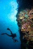 Sporttauchen des blauen Wassers des Tauchers bunaken Indonesien-Seeriffozean Lizenzfreie Stockfotos