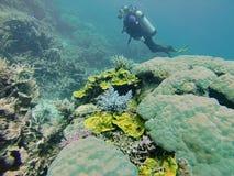 Sporttaucher auf dem Great Barrier Reef stockfotografie