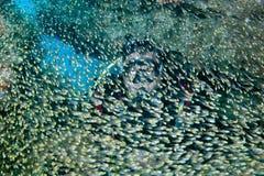 Sporttaucher innerhalb des Glases fischt riesigen Köderball lizenzfreies stockbild