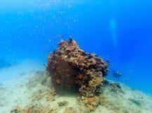 Sporttaucher nahe bei einem korallenroten Berggipfel Lizenzfreie Stockfotografie