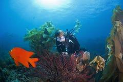 Sporttaucher und Gorgonian-Koralle stockbilder