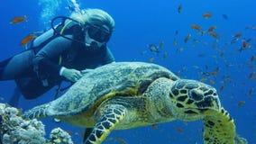 Sporttaucherfrau mit Meeresschildkröte stockfoto