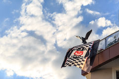 Sportteamflagge Besiktas türkische mit Adlersymbol des Teams auf Balkon nach Meisterschaft des Teams in Marmaris, die Türkei Stockbild
