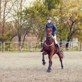 Sportvrouw het berijden paard op de ruiterconcurrentie Royalty-vrije Stock Foto's