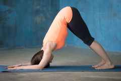 Sporty beautiful young woman doing dolphin pose Stock Image