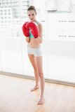 Sporty focused woman wearing boxing gloves Royalty Free Stock Images