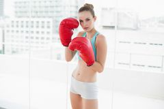 Sporty serious woman wearing boxing gloves Royalty Free Stock Photo