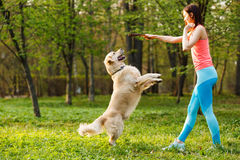 Sporty woman playing with dog. Showing stick in park afternoon on background of trees Royalty Free Stock Images