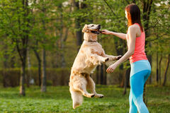 Sporty woman playing with retriever Stock Photo