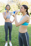 Sporty women drinking water Stock Images