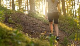 Sporty young woman walking in forest path at sunset. Summer night in nature at dawn. Sun shining. Girl hiking in the woods. Fitness, healthy lifestyle and Royalty Free Stock Photography