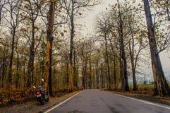 Sposób Dudhia przez lasu obraz stock