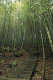 sposób lasów bambusowi schodki Zdjęcie Stock