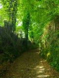 Sposób między drzewami w zielonym lasowym Camino de Santiago Primitiv Zdjęcie Stock