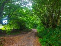 Sposób między drzewami w zielonym lasowym Camino de Santiago Primitiv Fotografia Stock