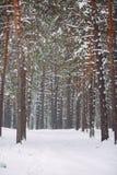 Sposób w śnieżystym lesie Zdjęcia Stock