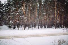 Sposób w śnieżystym lesie Zdjęcia Royalty Free