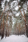 Sposób w śnieżystym lesie Obraz Stock