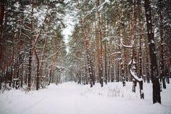 Sposób w śnieżystym lesie Zdjęcie Royalty Free